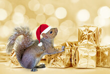 Christmas Squirrel With A Santa Hat And Golden Presents, Bokeh Lights Background