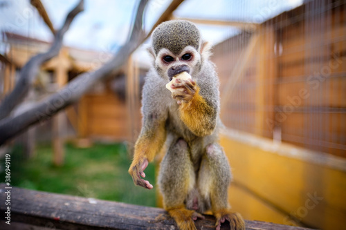 portrait of a monkey, animal garden, slovakia, eating mammal Fotobehang