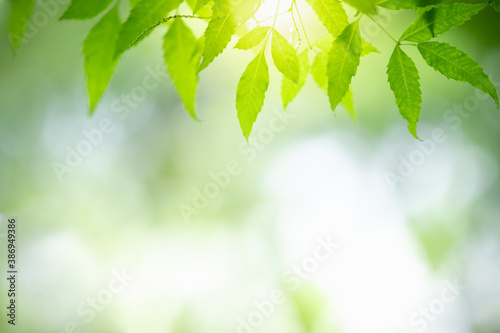 Fototapety zielone  nature-of-green-leaf-in-garden-using-as-background-natural-wallpaper