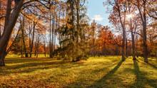 Sunny Scene In Autumn Park