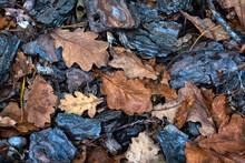 Autumn Background With Pine Bark And Oak Leaves. Autumn Forest Floor With Dry Pine Needles And Brown Oak Leaves