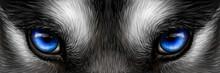 Siberian Husky Bright Blue Eyes Close Up. Digital Vector Drawing