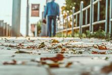Fallen Leaves On The Sidewalk ...