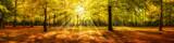 Fototapeta Las - Autumn forest panorama in sunlight