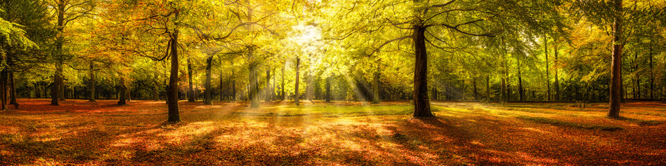 Autumn forest panorama in sunlight