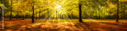 Autumn forest panorama in sunlight