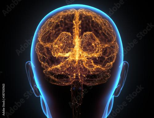 Obraz Human Brain Neural Network Cerebral Cortex - fototapety do salonu