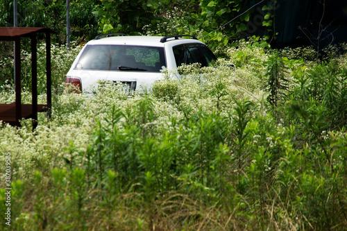 Cuadros en Lienzo 草むらに放置された乗用車