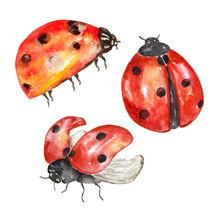 Watercolor Ladybug Set, Flying...