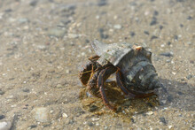 Hermit Crabs That Live By The ...