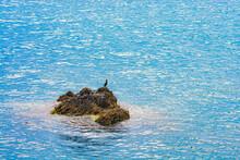 The Cormorant Bird Standing On...
