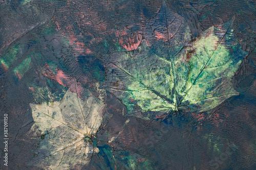 Zatopione liście klonu w farbie, w namalowanym, wielokolorowym, abstrakcyjnym tle, struktura.