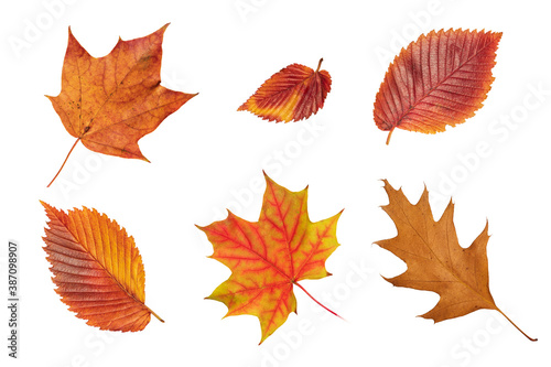 Fényképezés Set of fall leaf