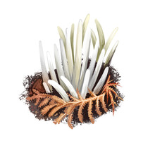 Clavaria Fragilis Fairy Fingers, White Worm Coral, Or Spindles Mushrooms Isolated. Species Of Fungus In Clavariaceae Clavaria Vermicularis. Digital Art Illustration Natural Food. Autumn Harvest Fungi.