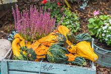 Various Little Ripe Pumpkins A...