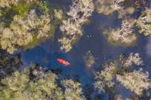 Aerial Top View Of Asian Woman, A Tourist, Paddling A Boat, Canoe Or Kayak With Trees In Rayong Botanical Garden, Paper Bark Forest In National Park In Thailand. People Lifestyle Adventure Activity.