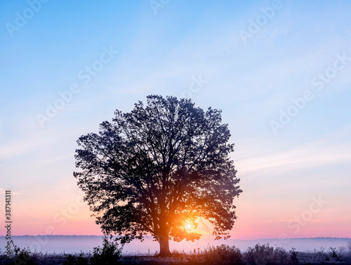 Silhouette of a mighty oak tree in the morning fog on a frosty autumn morning Canvas Print