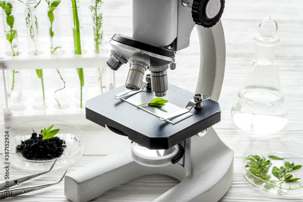 Fototapeta Microscope and plants on a table in scientific laboratory. Agriculture concept