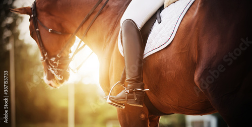 Fototapeta A bay racehorse with a rider in the saddle, who has black boots with spurs, is illuminated by bright rays of sunlight. Horseback riding. Equestrian sport. obraz