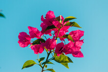 Flowers On Blue Sky