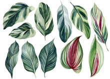 Set Of Green Tropical Leaves O...