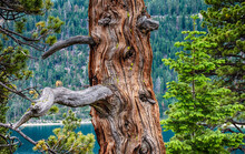 Knotted And Twisted Pattern Tree Trunk