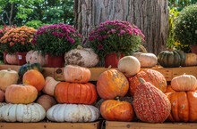 Pumpkins And Gourds On Outdoor...
