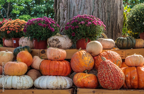 Fotomural pumpkins and gourds on outdoor display