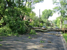 Multiple Trees Down After Tornado And Storm Damage