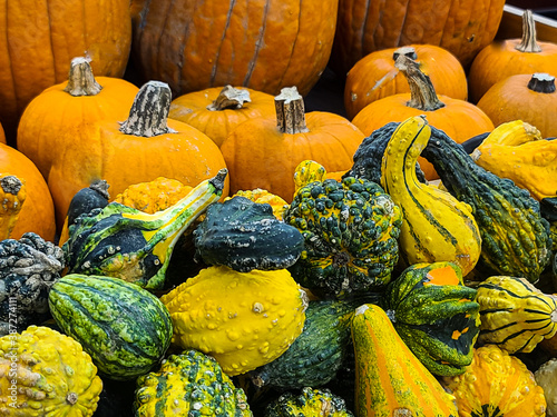 Cuadros en Lienzo Colorful gourds with pumpkins in October