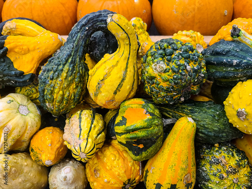 Fotomural Colorful gourds with pumpkins in October