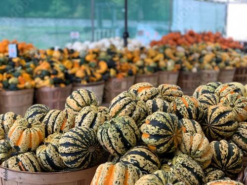 Cuadros en Lienzo Fall Gourds