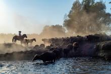Wild Buffalos In Lake Erciyes ...