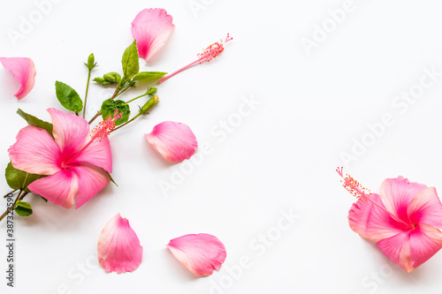 pink flowers hibiscus local flora of asia with leaf arrangement flat lay postcar Fototapet