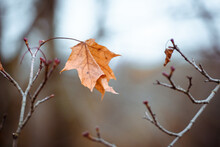Autumn Leaf Alone On A Branch-...