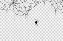 Spider  Hanging From Spiderweb...