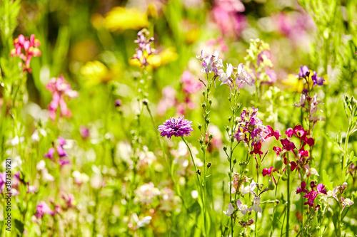 gardening, botany and flora concept - beautiful field flowers in summer garden Billede på lærred