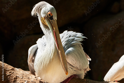 Foto beautiful portrait of pink pelican perched on a tree branch and its beak looking