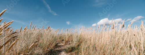 Fotografering Grass in the sand dunes on the beach