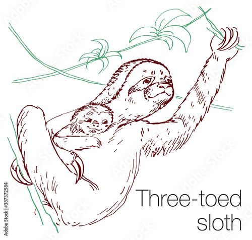 Naklejka premium Three-toed sloth hand drawn vector illustration