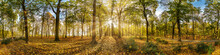 Beautiful Autumn Forest Or Park Hdri Panorama With Bright Sun Shining Through The Trees. Scenic Landscape With Pleasant Warm Sunshine