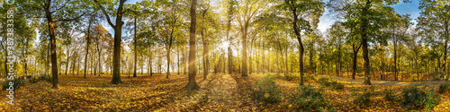 Obraz Beautiful autumn forest or park hdri panorama with bright sun shining through the trees. scenic landscape with pleasant warm sunshine - fototapety do salonu