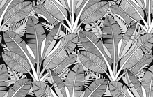 Black And White Exotic Plant And Palm Tree  Botanical Illustration. Bananas Tree Vector Seamless Pattern. Tropical Plants And Trees Adult Colouring Zentangle Book Page.