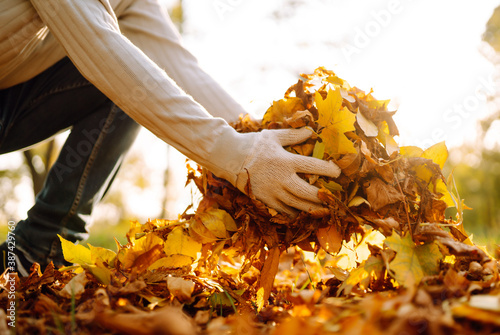 Fényképezés Cleaning of autumn leaves in the park