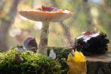 Still Life With Mouse  Under Mushrooms In Autumn Forest
