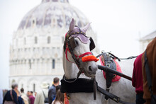 Horse Carriage In Pisa, Italy