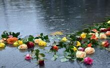 Rosen Am Brunnen Auf Dem Platz...