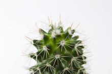 Cactus With Thorns In A Pot On...