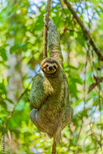 Naklejka premium The overwhelming beauty of the flora and fauna of Costa Rica. Photos taken during a tour through this beautiful country,