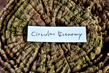 "A Sticky Note Reading ""Circular Economy"" Is Taped To A Decaying Tree Stump."